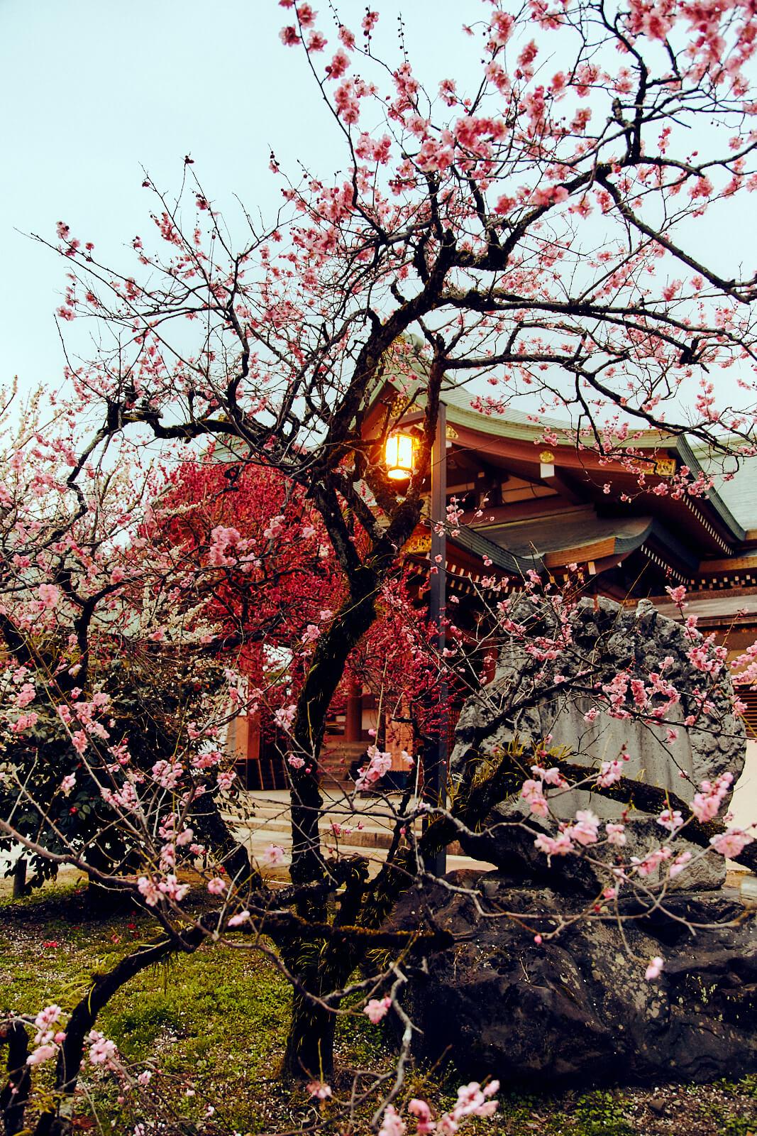 japan-travel-6